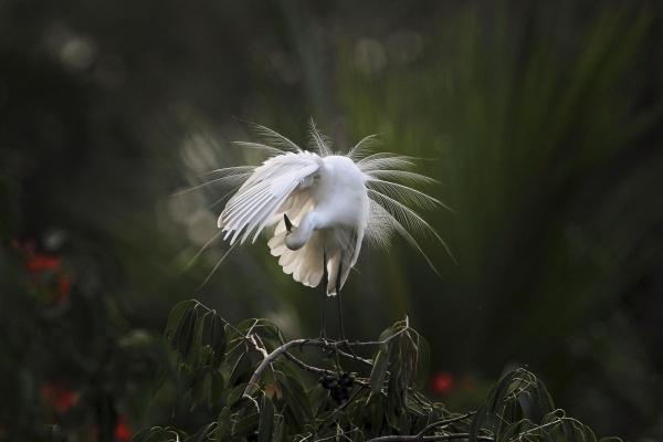 Image: Egret