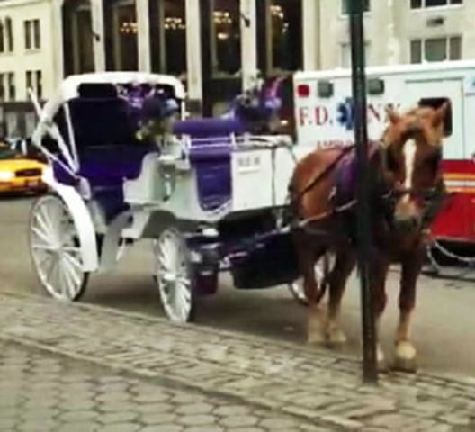 Image:  A carriage horse bolted on the streets of midtown Monday evening, galloping through Central Park and several streets before slamming into a yellow cab, crushing its door, police say.