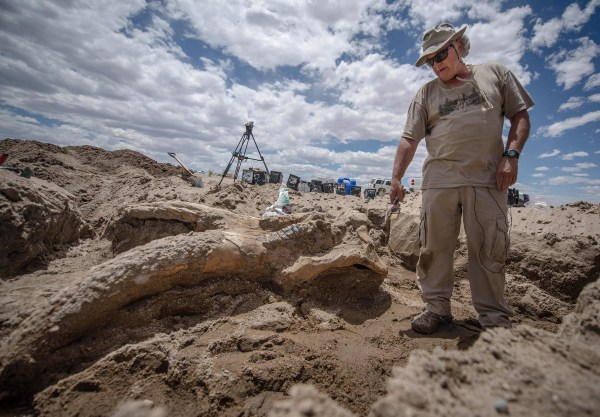 Image: Paleontologist Gary Morgan stands over a the fossil of a stegomastodon skull