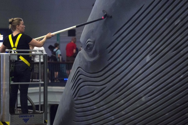 Image: Museum worker Brittany Janaszak cleans a 94-foot-long blue whale model at the American Museum of Natural History in Manhattan