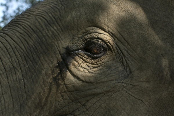 Image: Elephant Dung Coffee Produces The World's Most Expensive Cup