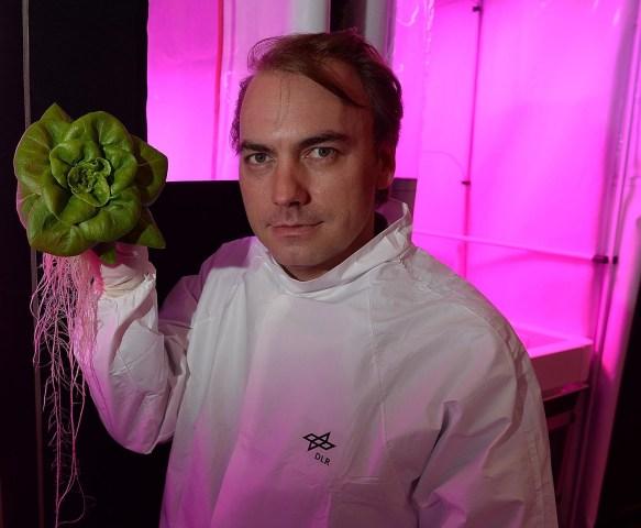 Image: Lettuce