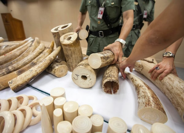 Image: Hong Kong Customs officers display seized ivory at the Hong Kong international airport