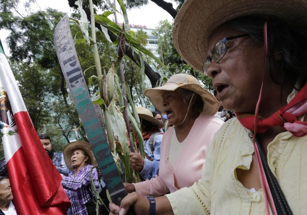Image: Mexican farmers and activists hold up machetes and corn stalks during march protesting government's plan to take their land for a new airport, at Reforma Avenue in Mexico Cit