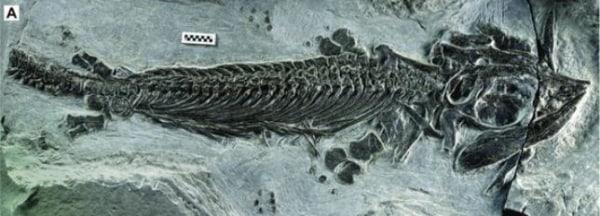 Image: Cartorhynchus lenticarpus