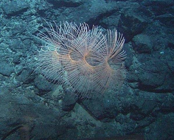 Image: Coral near Lost City