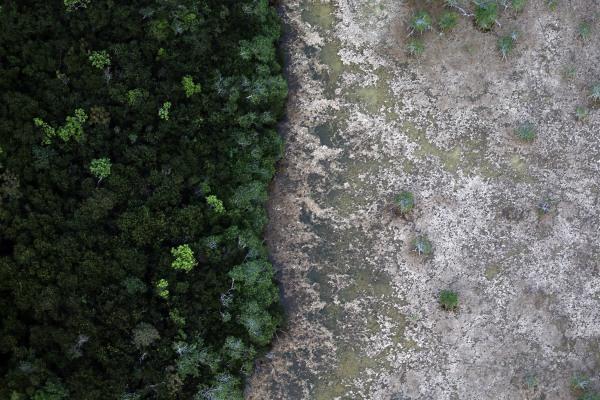 Image: The sensitive ecological landscape of the Everglades National Park