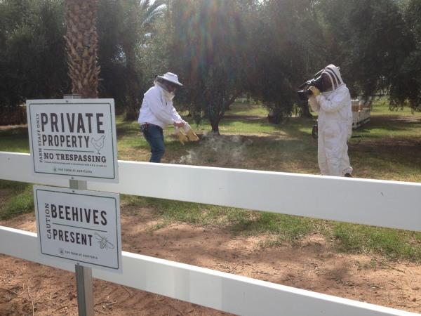 Beehives at Agritopia