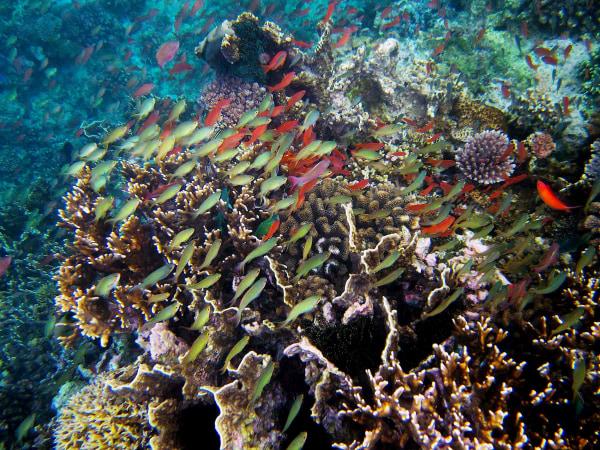 Image: Biodiversity