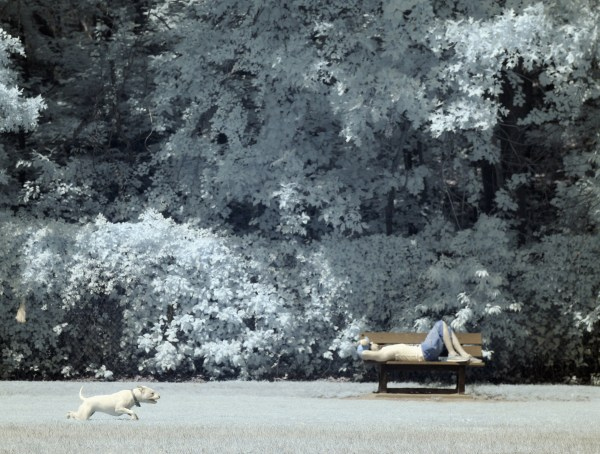 Image: Infrared Dog Park