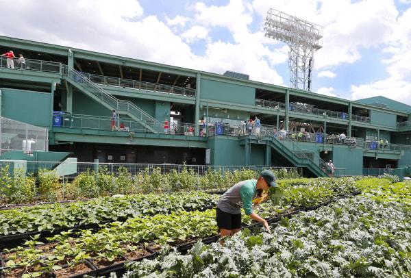 Image: Baltimore Orioles v Boston Red Sox