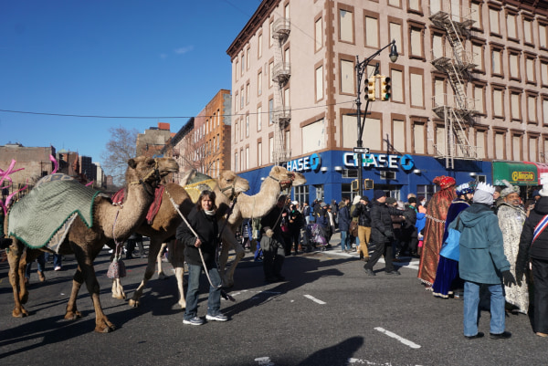 Camels in the 2016 Three Kings Day Parade