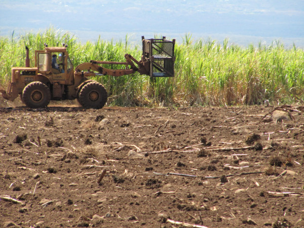 Heavy equipment in the sugar fields at Hawaii's last sugar plantation in Puunene, Hawaii.