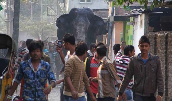 Image: Indian elephant ran amok
