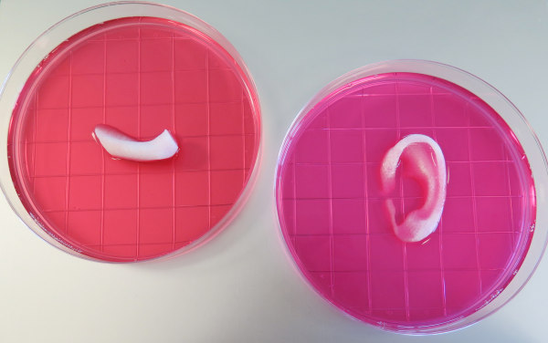 Image: Completed ear and jaw bone structures printed with the Integrated Tissue-Organ Printing System