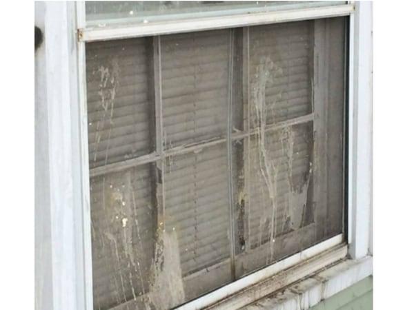 Image: Egged windows