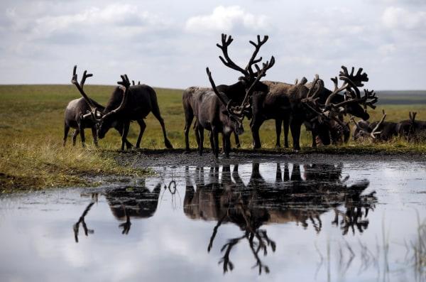 Image Reindeer
