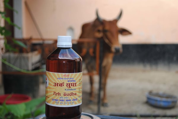 Image: A bottle of cow urine treatment