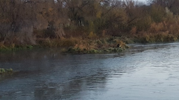 Image: The island in the Snake River where Steven Arrasmith swam