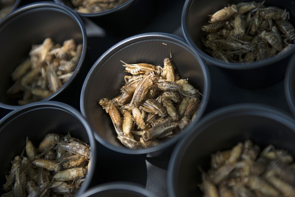 Local Pest Control Business Hosts Bug Eating Fundraiser For DC Central Kitchen