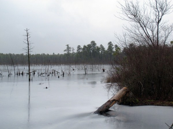 Image: A section of the Pinelands region in Lakehurst, New Jersey.