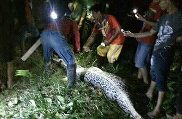 Image: INDONESIA-ANIMAL-ENVIRONMENT