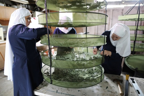 """Image: California """"weed nun"""" Christine Meeusen, who goes by the name Sister Kate, Desiree Calderon, who goes by the name Sister Freya, and India Delgado, who goes by the name Sister Eevee, check hemp that is drying at Sisters of the Valley near Merced"""