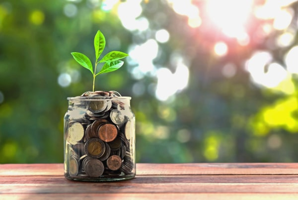 concept money and small tree in jar and sunshine