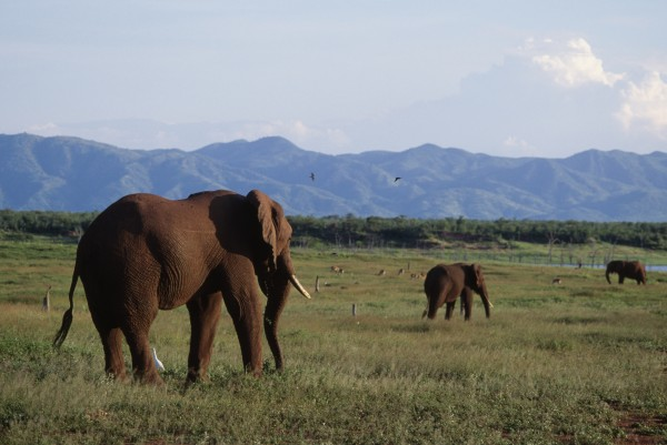 Image: African bush elephant gather near Lake Kariba in Zimbabwe