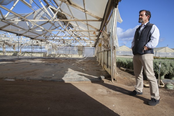 Image:Sol Orchard President & CEO Jeff Brothers surveys old cut flower green houses on a property along Spence Road in Salinas that he will be converting for marijuana farming.