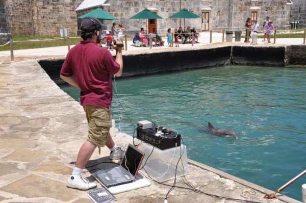 Jason Bruck records Caliban, a 19-year-old bottlenose at Dolphin Quest Bermuda.