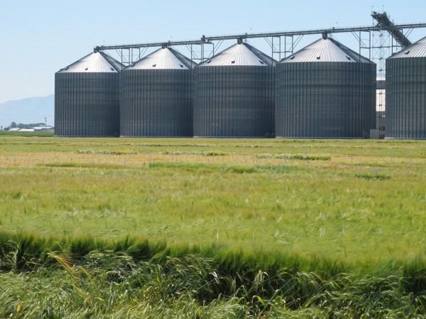 Showcase barley farm