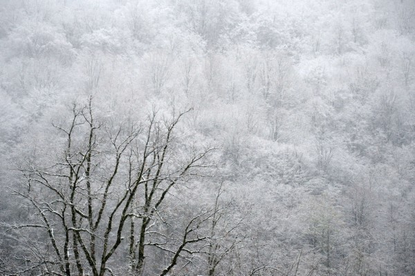 What the organizers are guaranteeing. A view of the snow-covered trees on a mountain side in Krasnaya Polyana near the Black Sea resort city of Sochi....