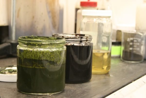 Image of algae, bio-crude, gas