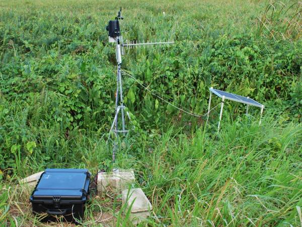 The original recording station established in a wetland in Sabana Seca, Puerto Rico.