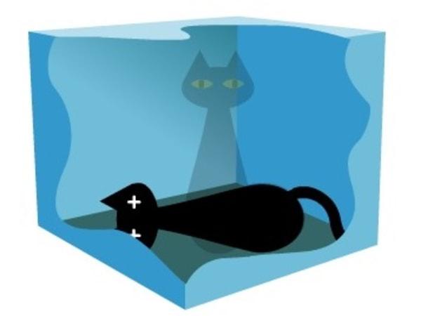 Image: Schrodinger's Cat