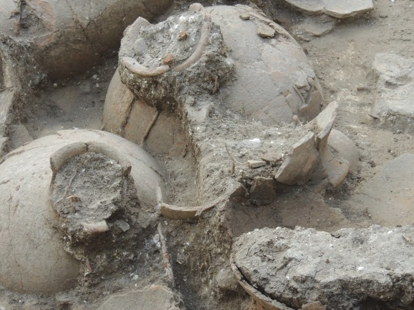 3,700-year-old jars were discovered in an ancient palatial wine cellar unearthed by researchers at Tel Kabri in July 2013. The team worked in da...