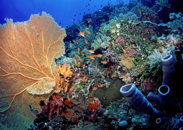 Coral reef ecosystem in Indonesia