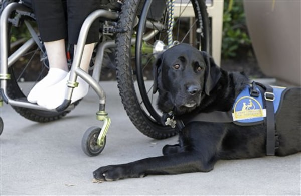 In this photo taken Tuesday, Oct. 8, 2013, Caspin a service dog sits below Wallis Brozman outside at a shopping mall in Santa Rosa, Calif. Other victi...