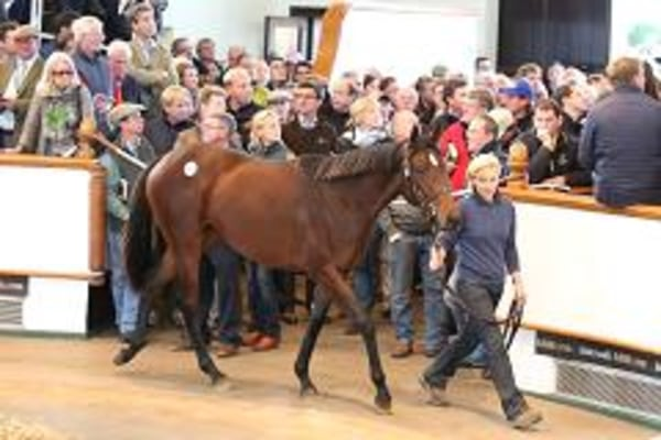 An as-yet unnamed filly was sold at auction for $8 million, the highest price ever for a one-year-old.