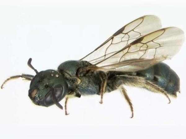 bee history
