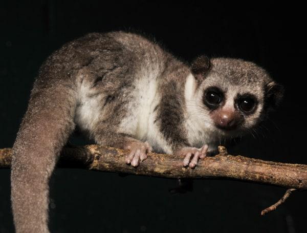 In warm weather, hibernating fat-tailed lemurs don't enter non-REM deep sleep.