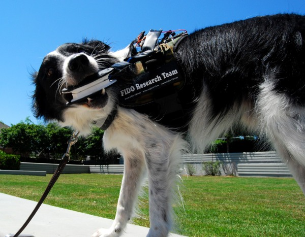 Sky the Border Collie chomps into a bite sensor, one of a few different doggie communication tools that researchers at Georgia Tech are developing.