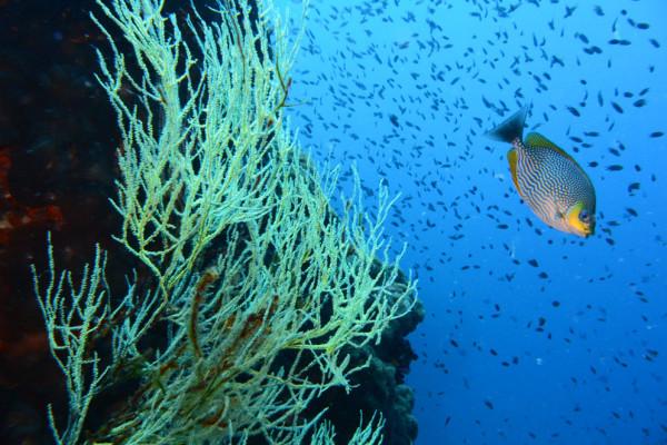 Sample underwater shot taken with Nikon's AW1 camera.