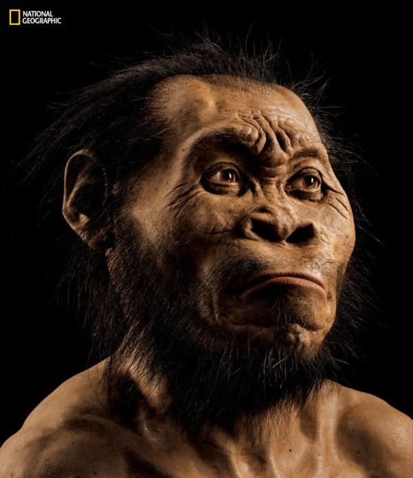 IMAGE: Reconstruction of Homo naledi