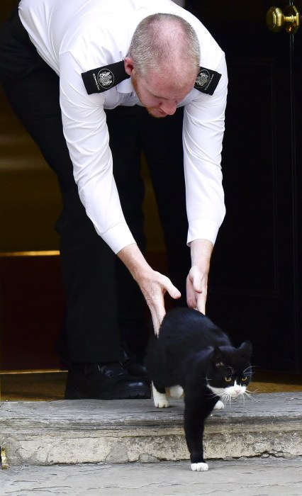Image: Palmerston, Boris Johnson's cat is evicted
