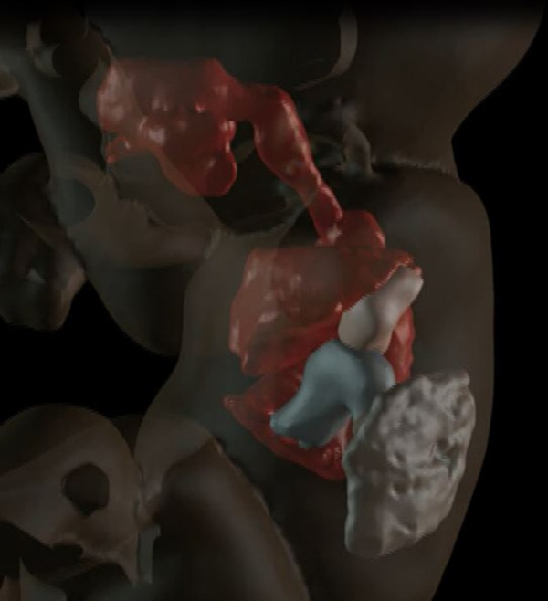 Image: Visualization of internal structures at 27 weeks