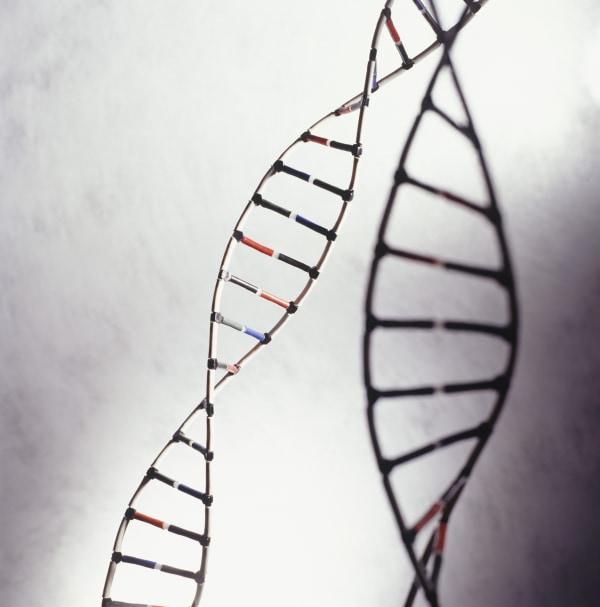 DNA models