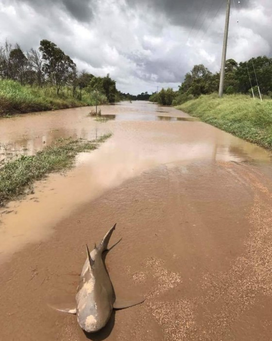Image: Rain depression causes floods after Cyclone Debbie
