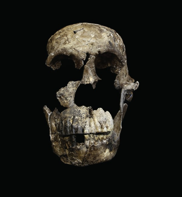 "Image: A ""Neo"" skull of Homo naledi from the Lesedi Chamber"